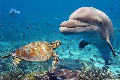 Dolphin and Turtle Underwater on Reef Background Looking at You-Andrea Izzotti-Photographic Print