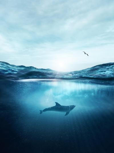 Dolphin Underwater- Blue-Photographic Print