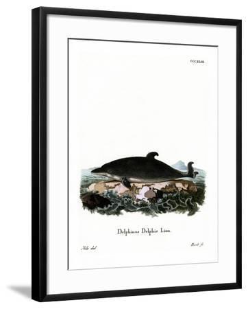 Dolphin--Framed Giclee Print