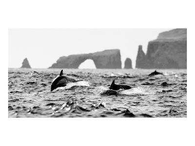Dolphins at Anacapa Arch-Steve Munch-Art Print