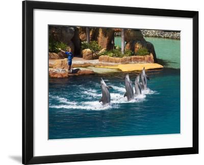 Dolphins, Sea World, Gold Coast, Queensland, Australia-David Wall-Framed Photographic Print