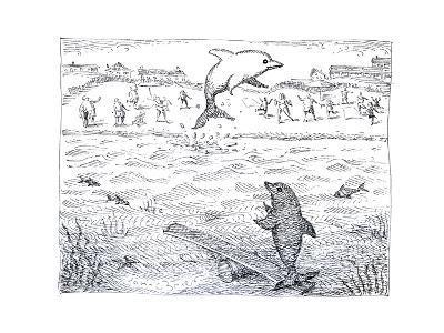 Dolphins using spring board to jump. - Cartoon-John O'brien-Premium Giclee Print