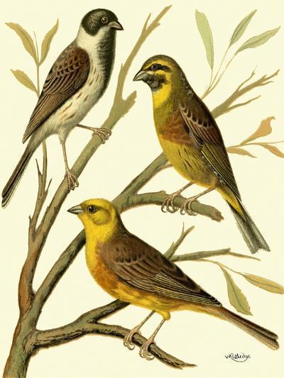 Domestic Bird Family I-W^ Rutledge-Art Print