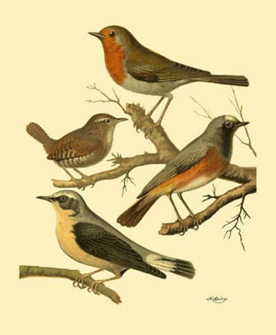 Domestic Bird Family III-W^ Rutledge-Art Print