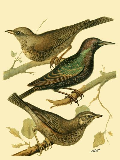Domestic Bird Family IV-W^ Rutledge-Art Print