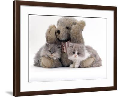 Domestic Cat, Two Blue Persian Kittens with a Brindle Teddy Bear-Jane Burton-Framed Photographic Print