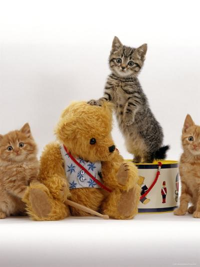 Domestic Cat, Two Ginger Kittens and a Tabby with Ginger Teddy Bear-Jane Burton-Photographic Print