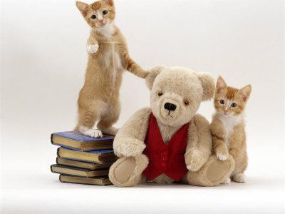 https://imgc.artprintimages.com/img/print/domestic-cat-two-red-kittens-with-cream-teddy-bear-in-red-waistcoat_u-l-q10nzrn0.jpg?p=0