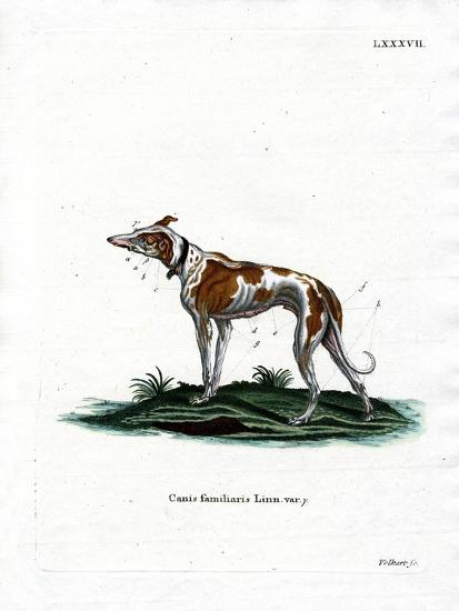 Domestic Dog--Giclee Print