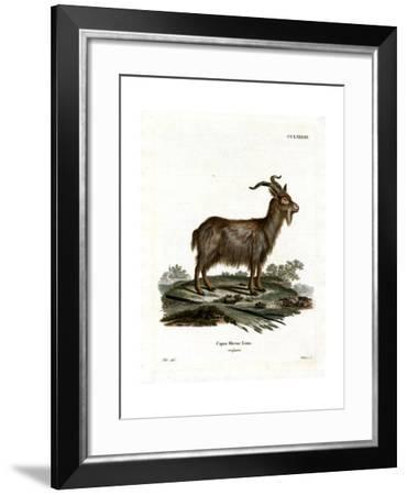 Domestic Goat--Framed Giclee Print