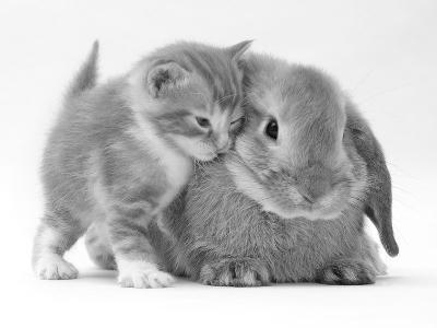 Domestic Kitten (Felis Catus) Next to Bunny, Domestic Rabbit-Jane Burton-Photographic Print