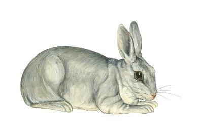 Domestic Rabbit (Oryctolagus Cuniculus), Mammals-Encyclopaedia Britannica-Art Print