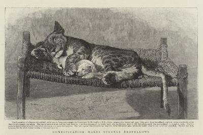 Domestication Makes Strange Bedfellows--Giclee Print