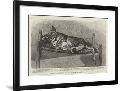 Domestication Makes Strange Bedfellows--Framed Giclee Print