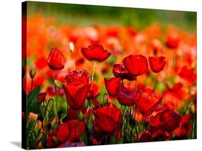 Dominante rossa-Fulvio Ferrua-Stretched Canvas Print