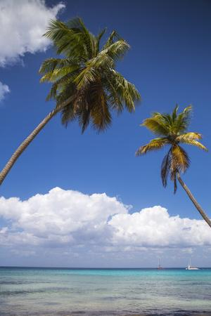 Dominican Republic, Punta Cana, Parque Nacional Del Este, Saona Island, Catuano Beach-Jane Sweeney-Photographic Print