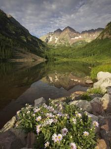 A Spring Bouquet of Aspen Daisies Decorates the Maroon Lake Shoreline by Don Grall