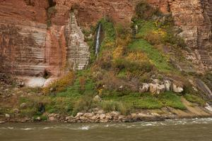 Arizona, Grand Canyon NP. Fresh-Water Spring Flows from Canyon Wall by Don Grall