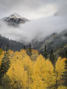 Aspens in their Autumn Finery Deep in the Uncompahgre River Gorge Near Ouray by Don Grall
