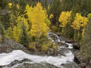 Bear Creek Falls in the Uncompahgre River Drainage, Flowing Past a Stand of Aspen by Don Grall
