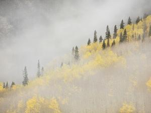Clouds Envelope a Mountainside of Aspen Trees in their Autumn Splendor by Don Grall