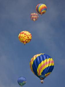Colorful Hot Air Balloons Decorate the Morning Sky, Colorado Springs, Colorado, USA by Don Grall