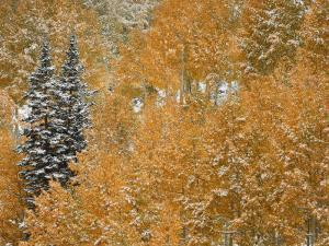 Little Cottonwood Canyon and Alta Basin in the Wasatch Mountains of Utah after Snowfall by Don Grall