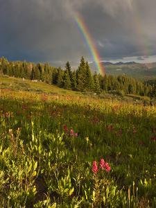 Meadow, Shrine Pass, Colorado, USA by Don Grall
