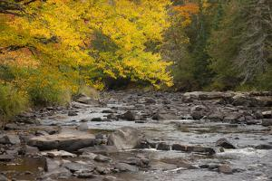 Michigan, Upper Peninsula. Autumn-Colored Trees Along Sturgeon River by Don Grall