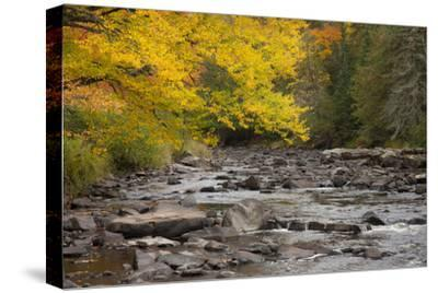 Michigan, Upper Peninsula. Autumn-Colored Trees Along Sturgeon River