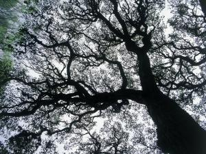 Old Oak Tree Limbs Against the Sky, TX by Don Grall