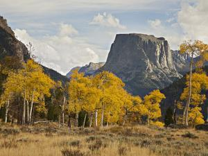 Quaking Aspens (Populus Tremuloides) in the Fall at the Base of Square Top Mountain by Don Grall