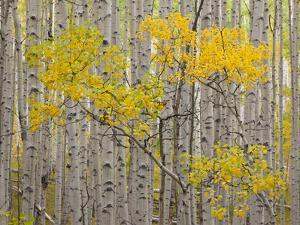 White River National Forest, Colorado, USA by Don Grall