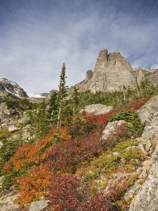 Willows in Fall Color Decorate the Alpine Landscape Below Notchtop Mountain at Timberline by Don Grall