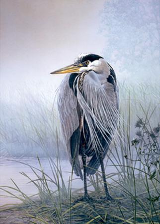 Brooding Heron