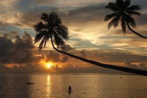 Silhouette of leaning palm trees and a woman at sunrise on Taveuni Island, Fiji, Pacific by Don Mammoser