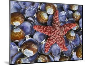 Close-Up of Starfish and Clam Shells, Hood Canal, Seabeck, Washington, USA by Don Paulson