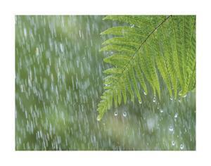 Fern in Rain by Don Paulson