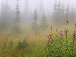 Misty Meadow Scenic, Revelstoke National Park, British Columbia, Canada by Don Paulson