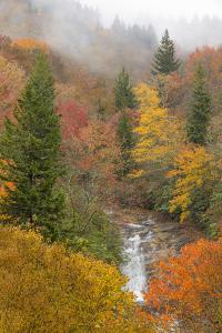 North Carolina, Bubbling Springs Falls. Autumn Scenic of the Falls by Don Paulson