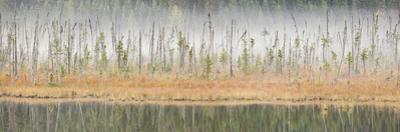 Canada, British Columbia, Mount Robson Provincial Park, Wetlands in Fog by Don Paulson Photography