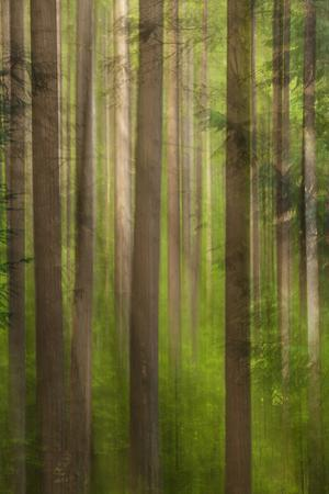 Usa, Oregon, Columbia River Gorge, Elowah Falls Trail, View of Tree Trunks by Don Paulson Photography