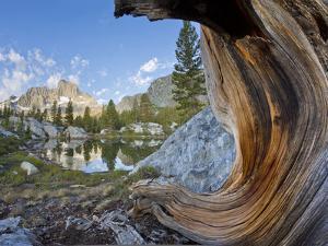 USA, California, Inyo NF. Old pine and tarn next to Garnet Lake. by Don Paulson