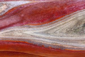 USA, California, Mount Diablo State Park. Manzanita Wood Detail by Don Paulson