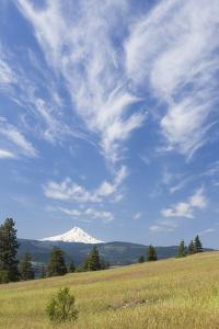 USA, Washington State, Columbia River Gorge. Summer Meadow Landscape by Don Paulson