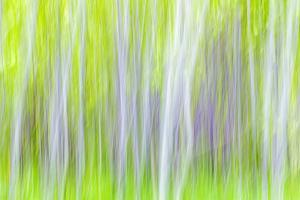 USA, Washington State, Yakima River Trail. Abstract of Aspen Trees by Don Paulson