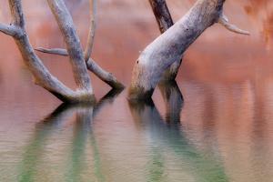 Utah, Glen Canyon Recreation Area. Dead Cottonwood Trunks in Lake by Don Paulson
