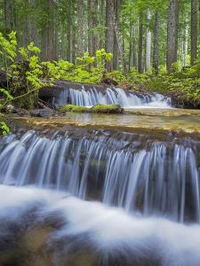 Washington State, Gifford Pinchot NF. Waterfall and Forest Scenic by Don Paulson