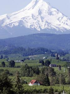 Mount Hood over Houses Scattered amongst Orchards and Firs, Pine Grove, Oregon by Don Ryan