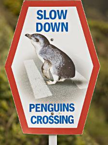 Sign Warning Drivers About Penguins in the Road, Wellington, North Island, New Zealand by Don Smith